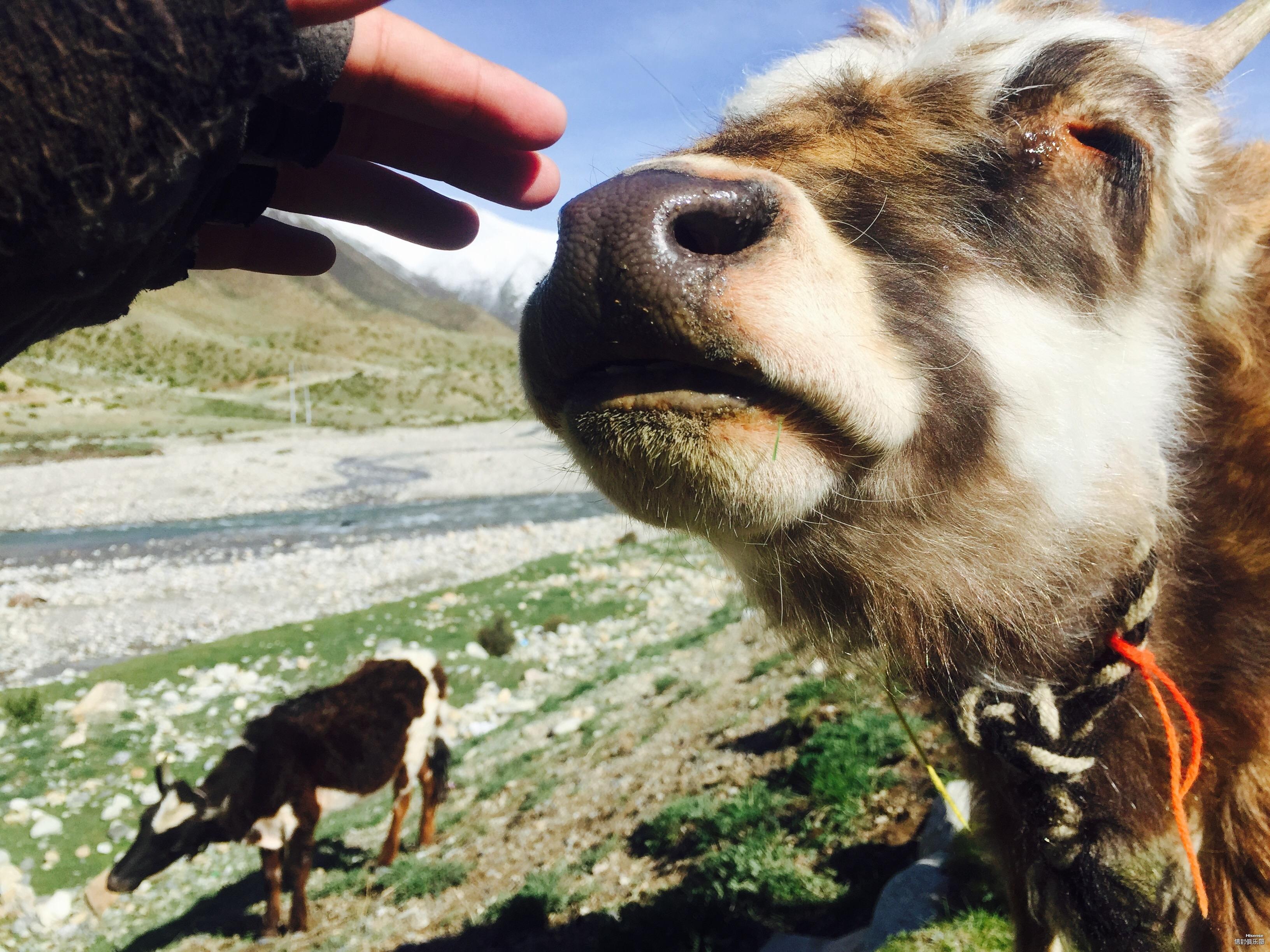 西藏然乌安久拉山.jpg