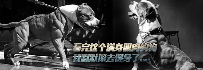 经过训练的狗狗能有多强,神犬养成记