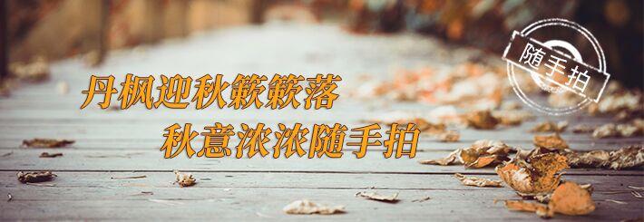 丹枫迎秋簌簌落,秋意浓浓随手拍